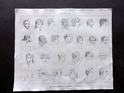 Phillips (Pub) 1823 Antique Print. Physiognomies of the Human Species